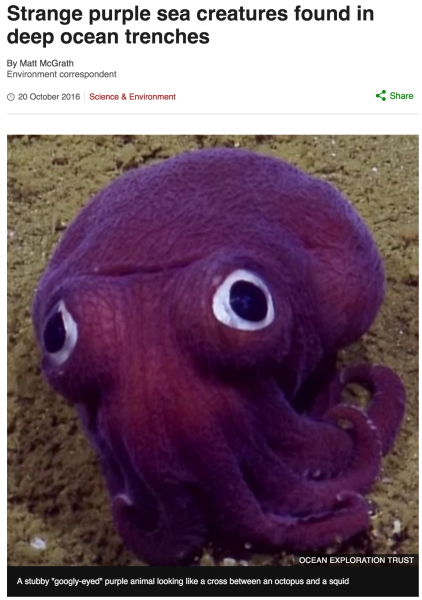 """Strange purple sea creatures found in deep ocean trenches"" inspiration for the Beasts of Balance octopus"